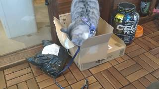 世界遺産の宗像大島からやってきた世界遺産猫のisle(あいる)君です。 ...