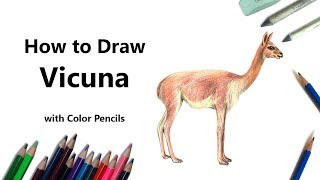 How to Draw a Vicuna with Color Pencils [Time Lapse]