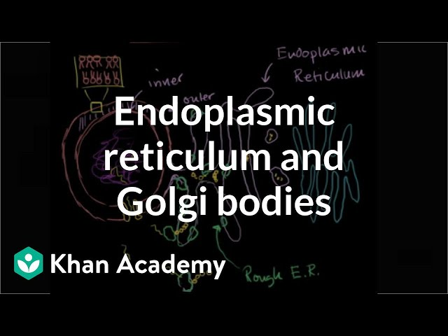 Endoplasmic reticulum and Golgi bodies | Biology | Khan Academy