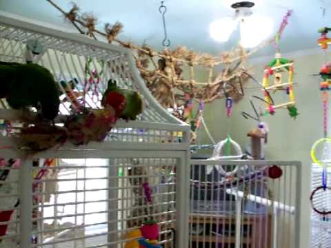 The Bird Room Youtube