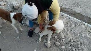 Борьба за жизнь собак продолжается