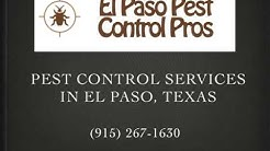 Bed Bug Exterminator in El Paso - El Paso Pest Control Pros