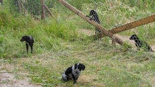 Zaniedbana posesja i biegające po osiedlu psy