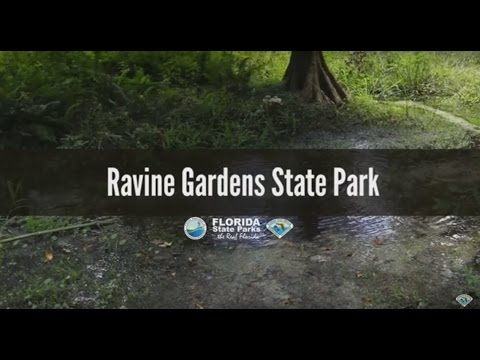 Firsthand Florida Fun: Ravine Gardens State Park