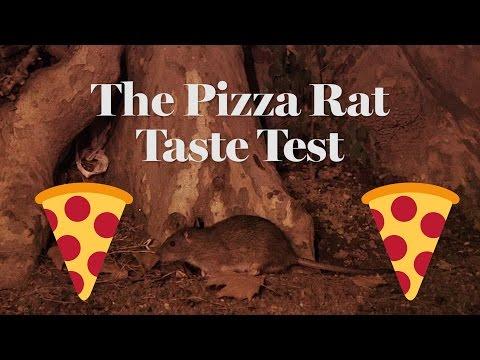 The Pizza Rat Taste Test