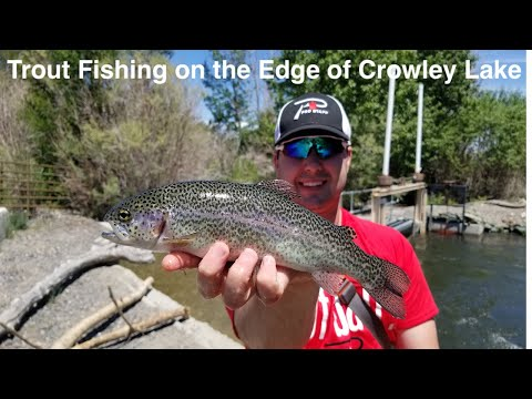 Trout Fishing On The Edge Of Crowley Lake