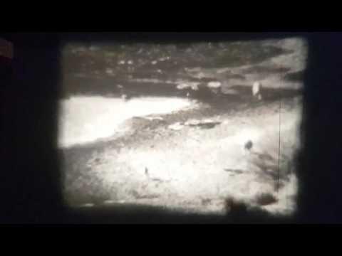 Vintage film from Kruger Park