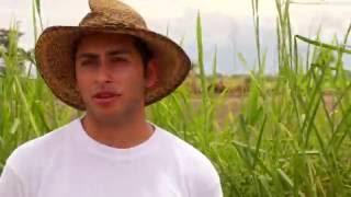 Agricultura al Día - Asistencia técnica y BP en cultivos de arroz