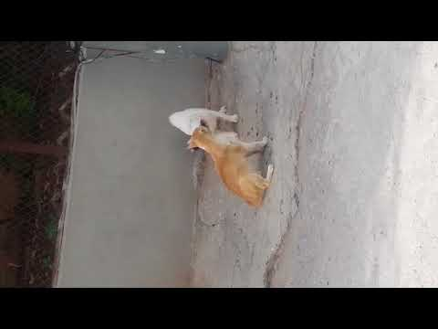 Two cats fighting in the street- must watch😮😮😮