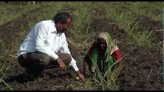 Better Management Practices (BMP) for sugarcane