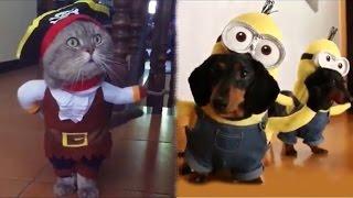 "Шоу ""Маски"", видео про кошек и собак"