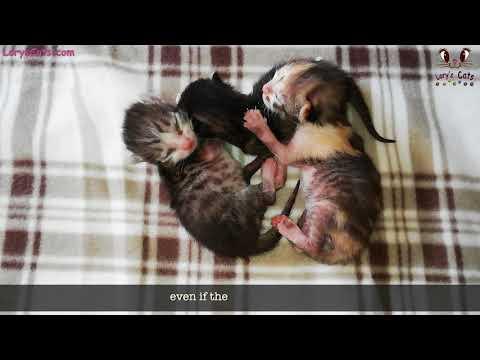 NEWBORN Kittens Needed Help