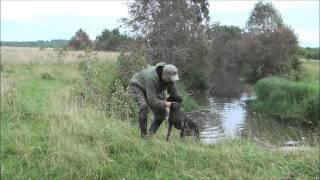 Охота с дратхааром