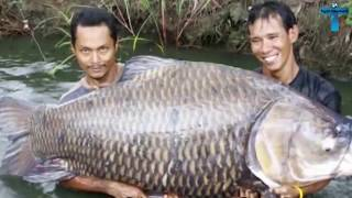 Top 10 Biggest Things Caught On Camera | Scary Mysterious Monster Catches Ever