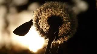 TRILLING-Sebastian Radu Seu cimbalom