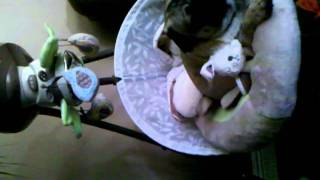 Max Dog Pug Snug In Snug-a-bunny Fisher Price Baby