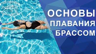 Основы плавания брассом для новичков
