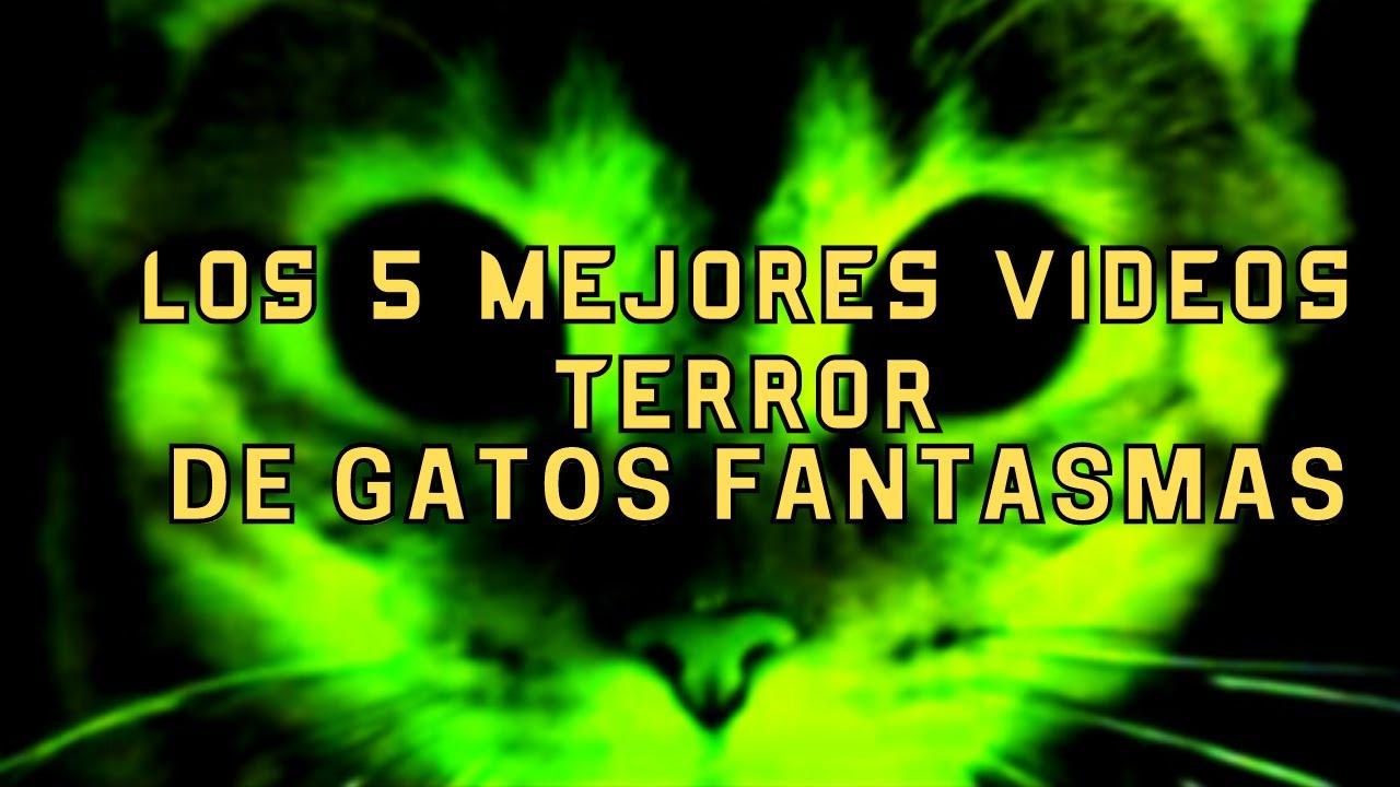 Los Mejores 5 Vídeos de Terror de Gatos Fantasma l Pasillo Infinito