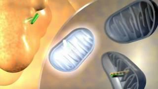 Eucerin DermoPURIFYER termékcsalád 5.mpg Thumbnail