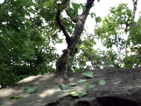 Surguja Ramgarh