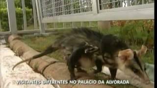 Baixar Saruê visita o Palacio da Alvorada-Luiz de castro