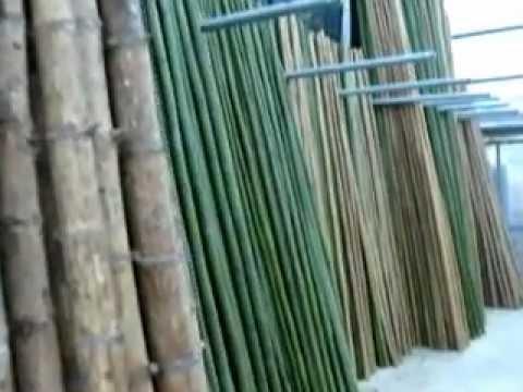canne bamb legname youtube