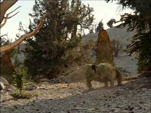 documentales bbc caminando con monstruos vida antes de los dinosaurios
