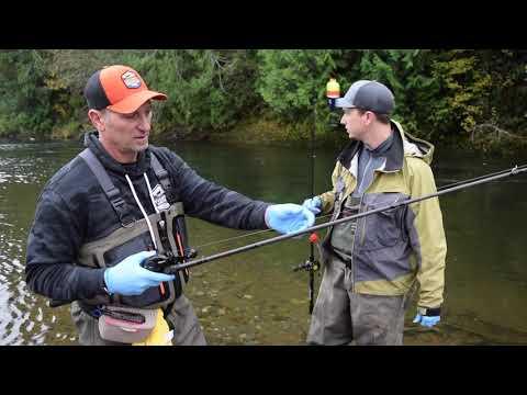 October Salmon Carnage! Egg Fishing Secrets