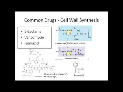 C20   Antimicrobial Drugs Pt 1
