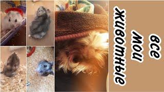 Мои животные//все мои животные//мое первое видео про животных