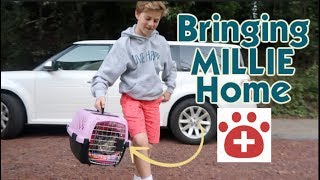 it-s-bringing-our-kitty-home-from-the-cat-hospital