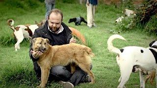 Video Los puros criollos - Perro criollo (Temporada 3)