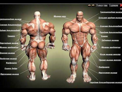 Как можно быстро накачать мышцы. Базовые упражнения.