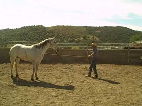 Rehabing the bucking horse part one David Lee Archer