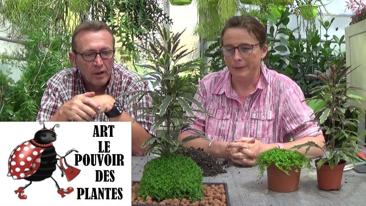 cha ne jardinage kok dama fa on art comment faire un kok dama youtube. Black Bedroom Furniture Sets. Home Design Ideas