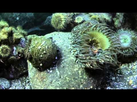 Phylum Porifera, animal kingdom from YouTube · Duration:  13 minutes 2 seconds