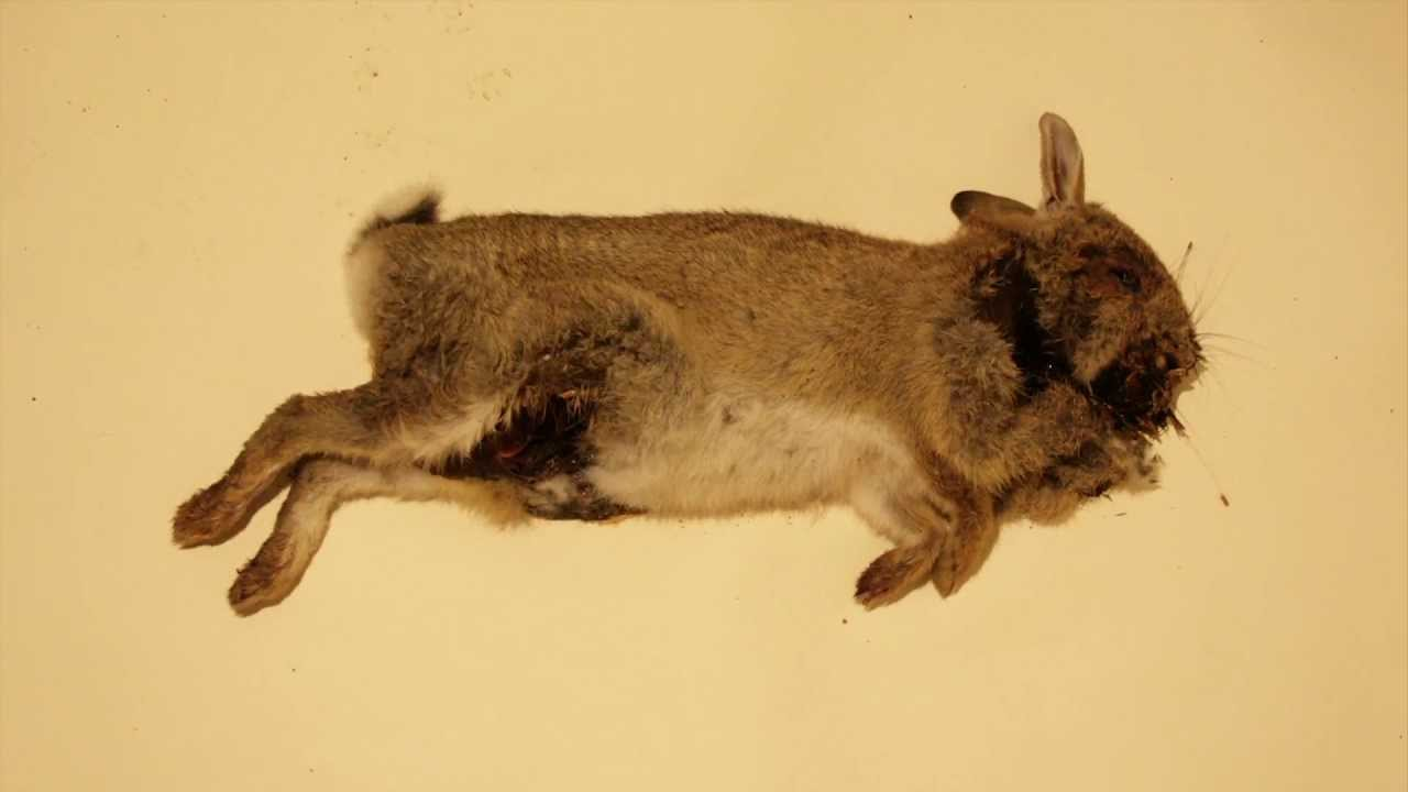 Rabbit Body decomposition composition | Time Lapse - YouTube Human Decomposition Time Lapse