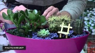 Композиция из кактусов и суккулентов NEW (2 серия)
