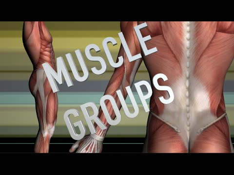 Shoulder Girdle Muscle Group - Kinesiology Quiz