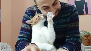トルコのピアニスト、サーパーさんちの猫たちは今日もピアノ演奏を楽しんでいるよ