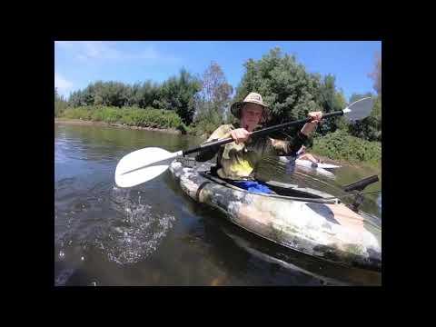 Kiewa River Murray Cod Fishing