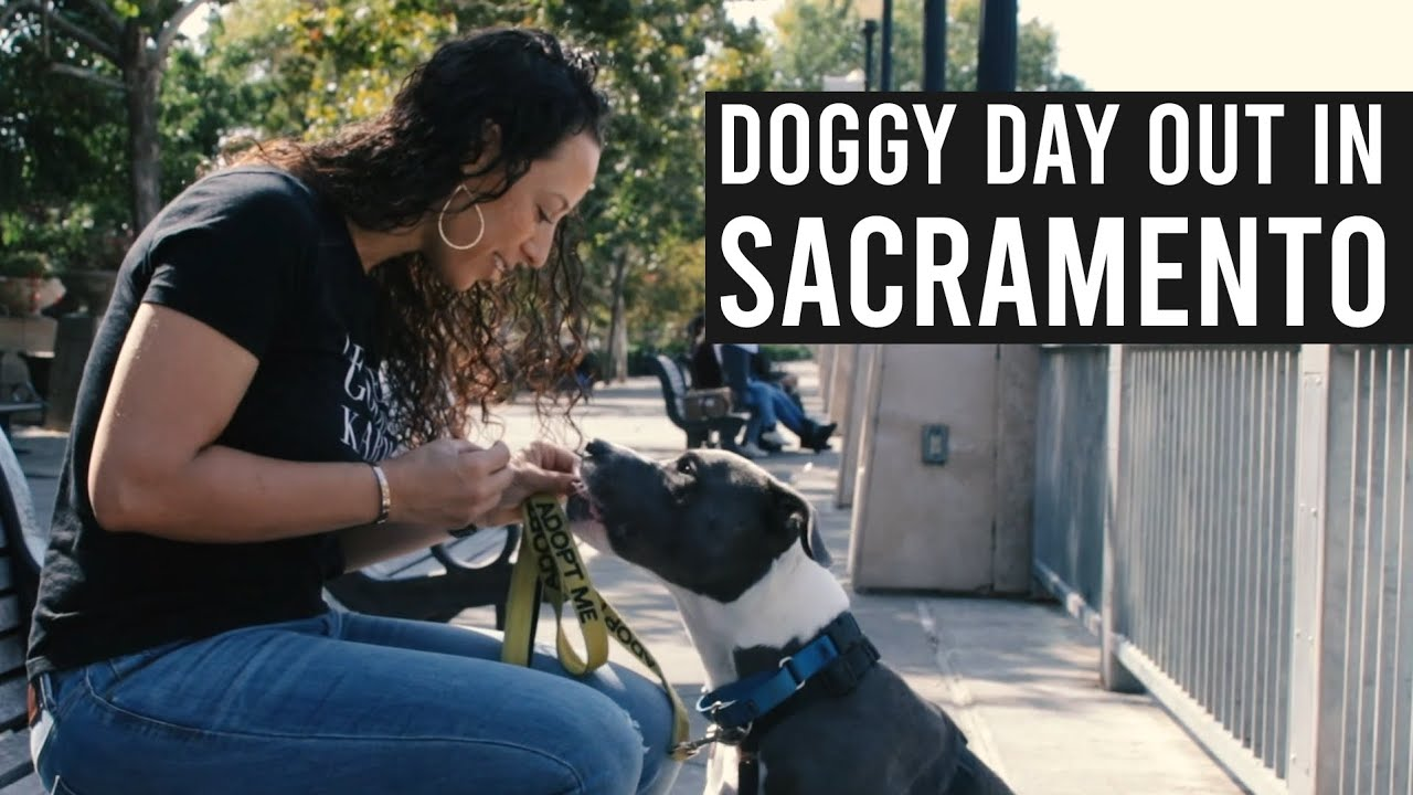 Sacramento Front Street Animal Shelter's Doggy Day Out Fits Your Busy Schedule
