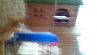 Первое видео, знакомство с животными .