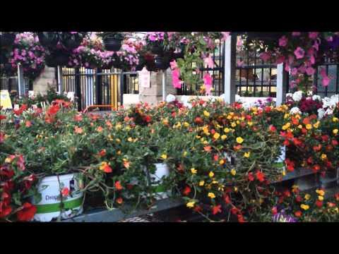 ❀✿Beautiful flowers at the Home Depot outdoor garden shop✿❀