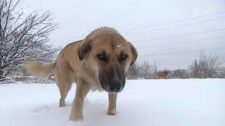 В Саратовской области произошел новый случай нападения бездомных собак на людей.