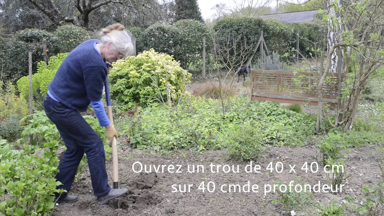 Plantation d'un rosier tige - YouTube