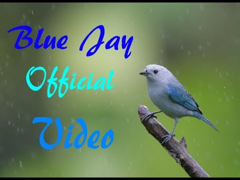Blue Jay (Official Music Video)