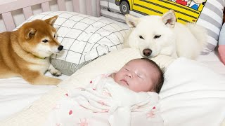 Dogs Meeting the Baby for the First Time!!!