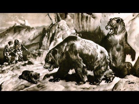Пещерный медведь (рассказывает палеонтолог Ярослав Попов)