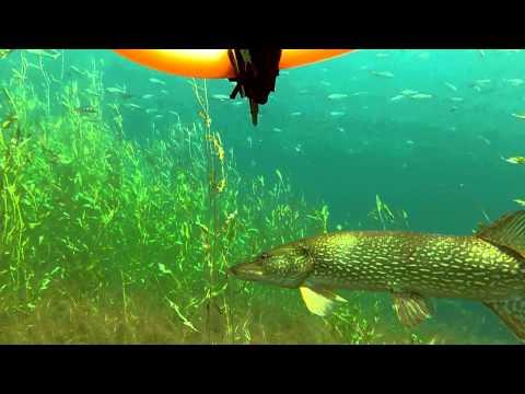 подводная охота тыва